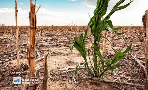 زیان-هزاران-میلیارد-تومانی-خشکسالی-برای-صنعت-کشاورزی-و-دامداری